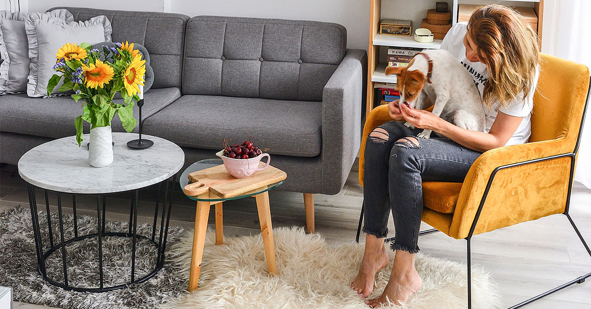Sofas and armchairs for homes with pets. Which furniture model and resistant upholstery fabric to choose?